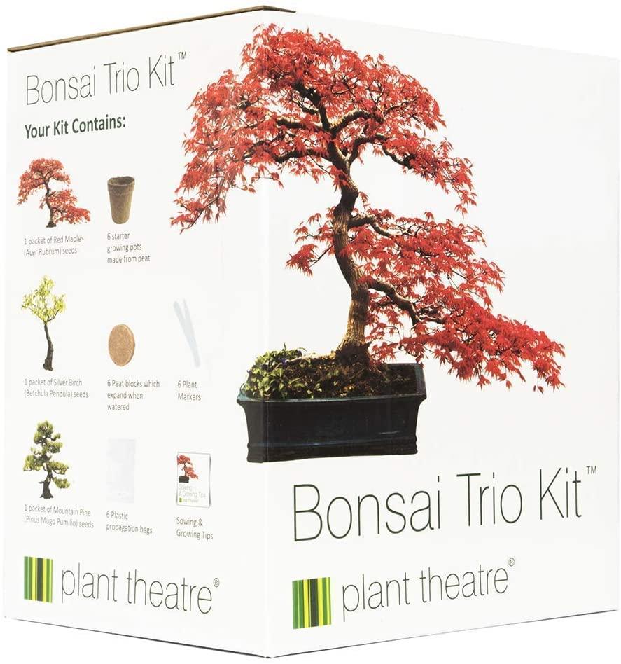 idées de cadeaux pour un collègue de travail Bonsai