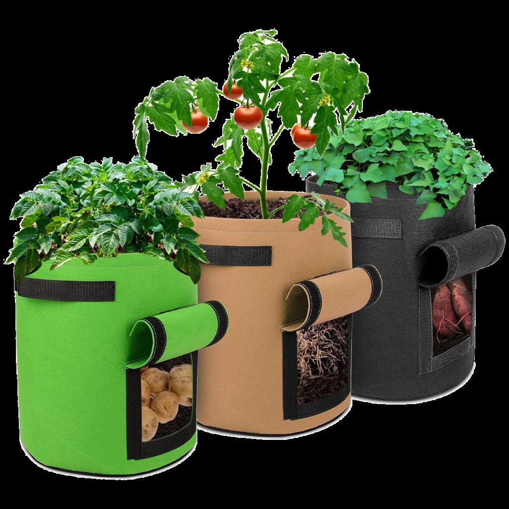 idées de cadeaux pour un collègue de travail Plantes